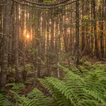 Forest in  in Fundy National Park Canada
